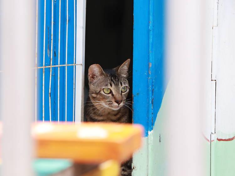 大澳貓:社區可愛身影