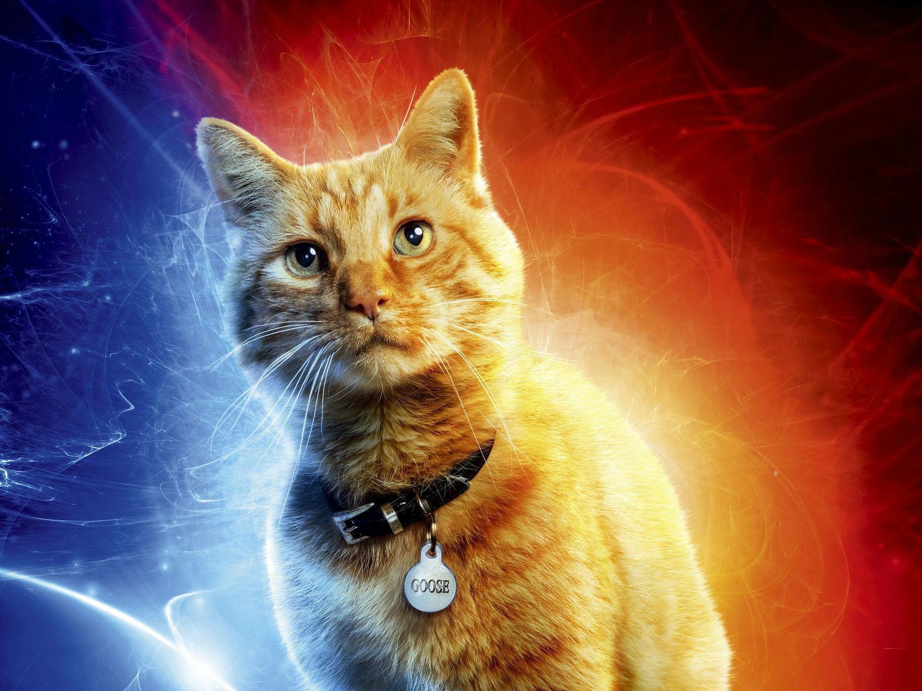 Los 10 gatos más adorables del cine y la TV