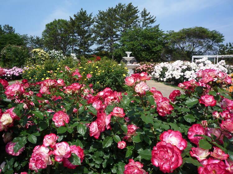 季節の花に囲まれて記念撮影する。