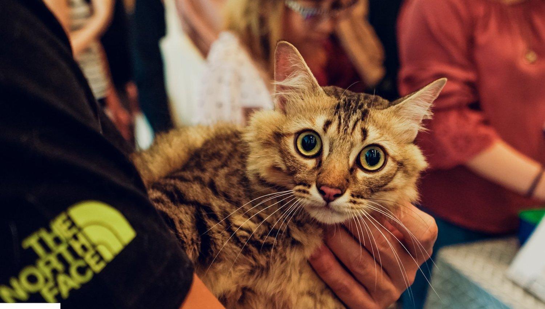 Singapore Cat Festival