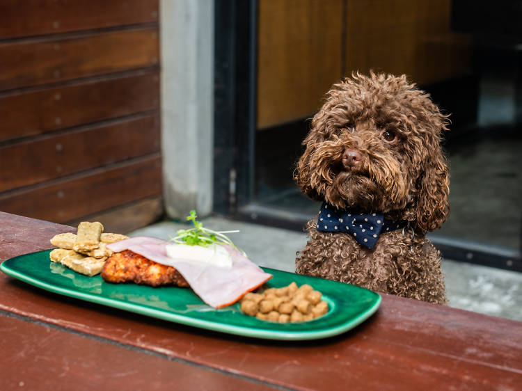 Dog-friendly pubs in Melbourne