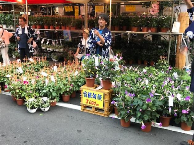 入谷朝顔祭り