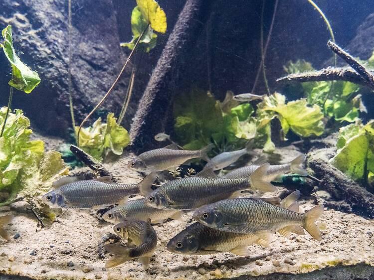 Visit Croatia's first freshwater aquarium