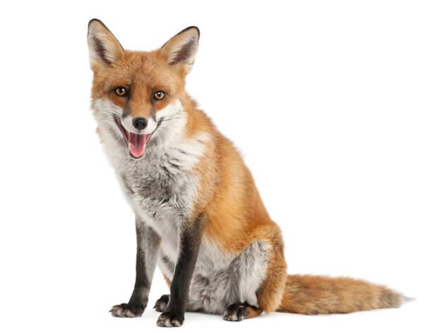 housing crisis, fox