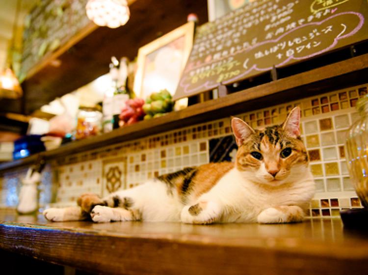 看板猫と乾杯する。