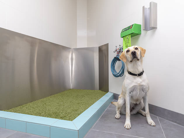 Dog standing at the pet bathroom facilities at Sydney Airport.