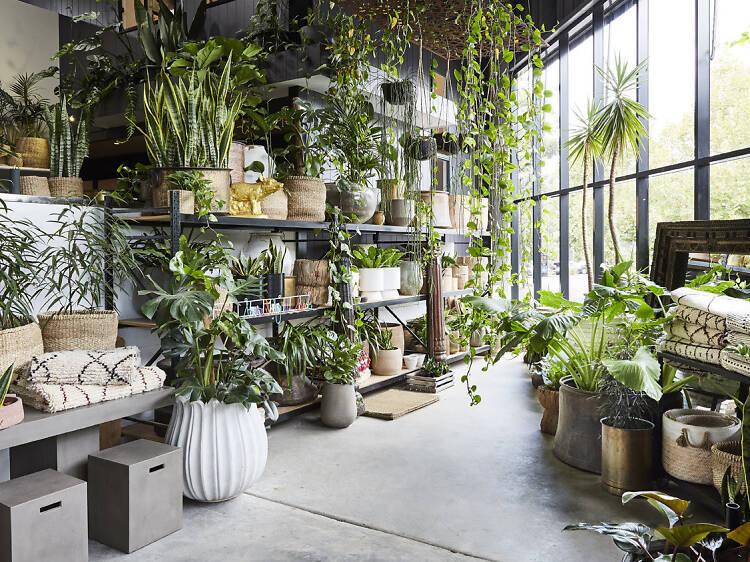 The best plant nurseries in Sydney
