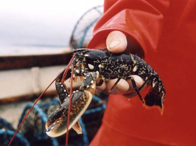 National Lobster Hatchery in Padstow