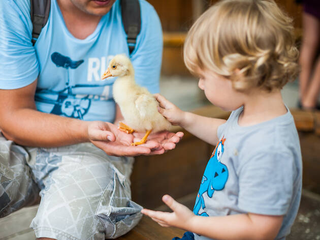 A child patting a duckling at Petting Zoo at Paddy's Market.