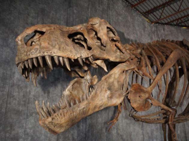 ティラノサウルス 復元骨格