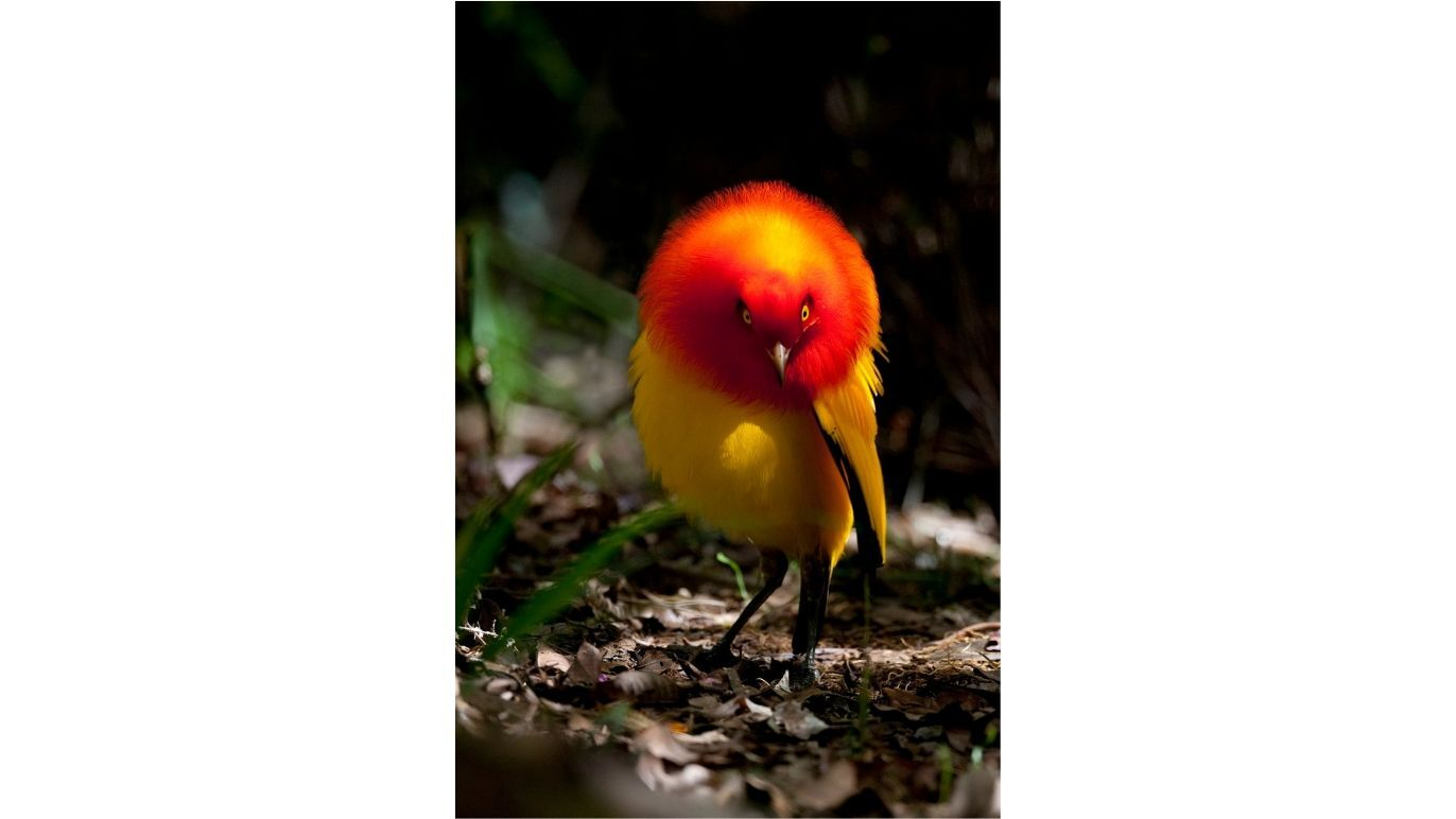 Shimada Tadashi: Wild Moments; The World of Beautiful Birds