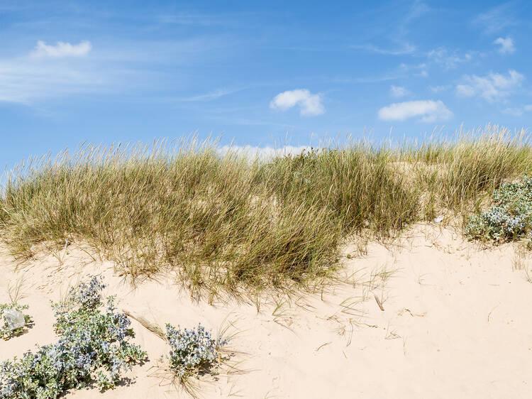 Dispa-se na Praia 19