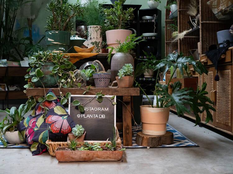 Planta Diseño Botánico