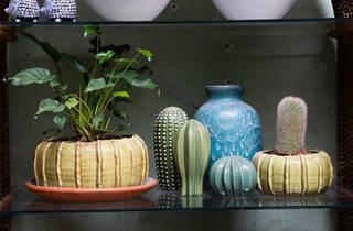 Planta Diseño Botánico (Foto: Alejandra Carbajal)