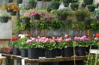 Potted plants on table at Plant nursery