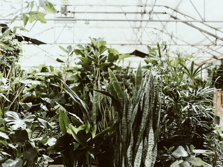 Annandale Garden Centre