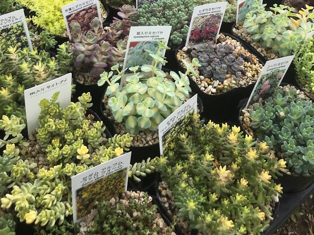 Botanical Picnic by Green Snap