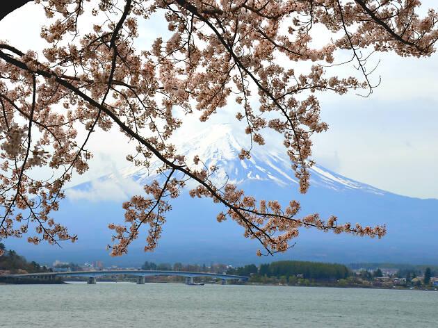 Lake Kawaguchiko - Mt Fuji