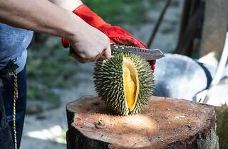 Dr Durian