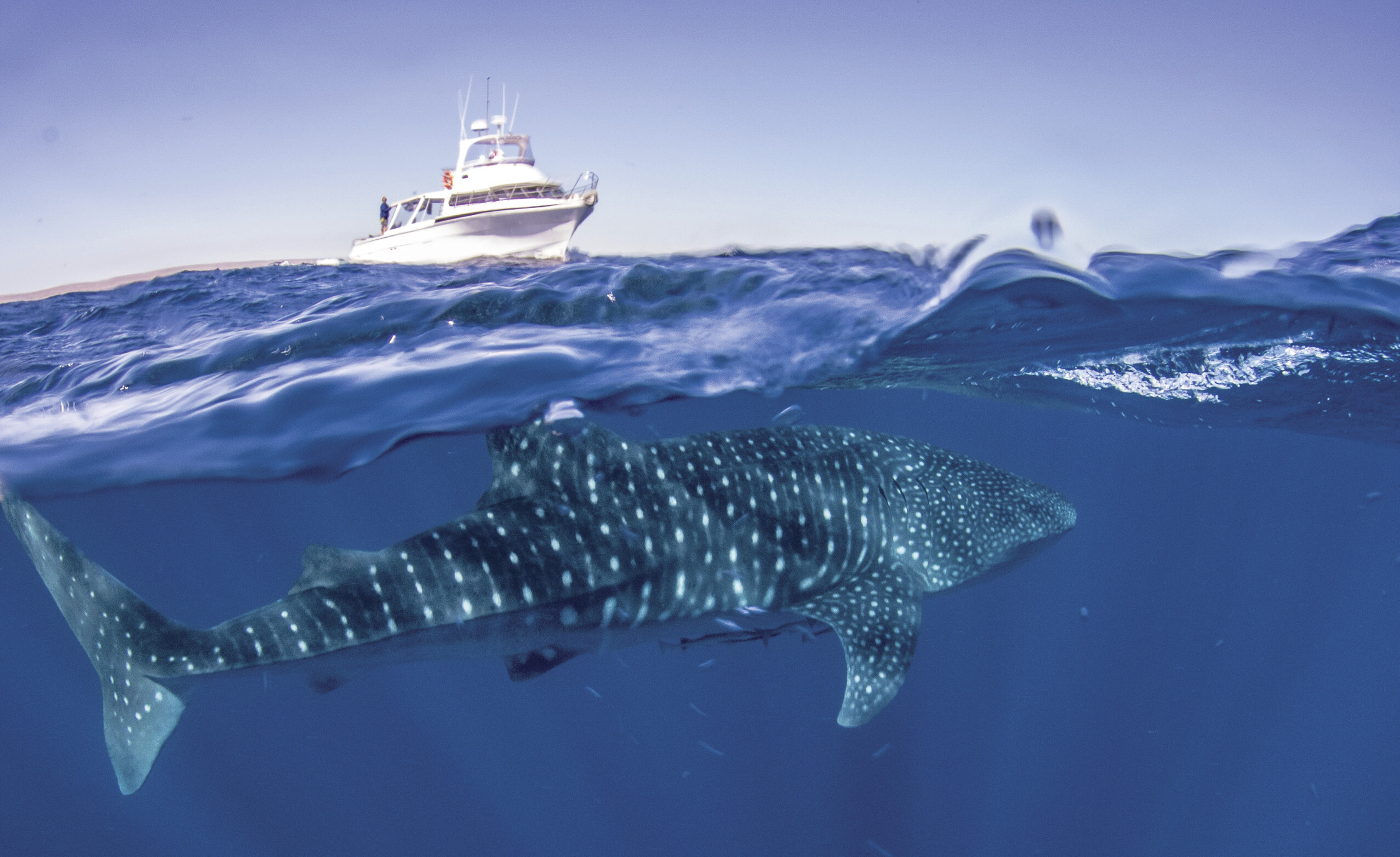 Exmouth Dive and Whalesharks Ningaloo