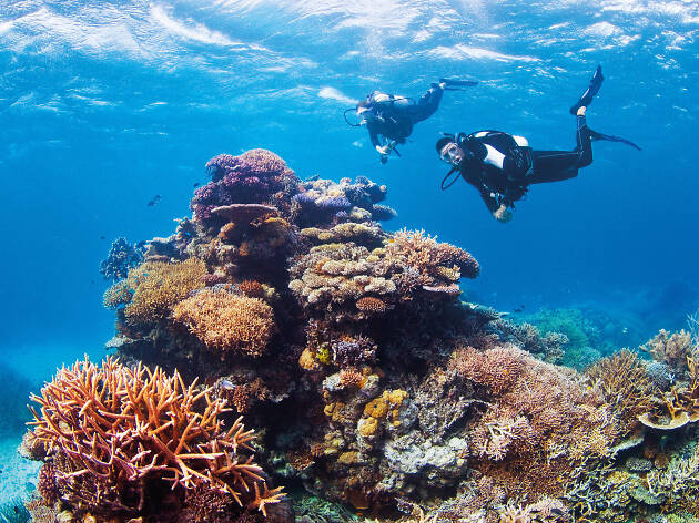 Challenger Bay Drift at Ribbon Reefs, Great Barrier Reef, QLD