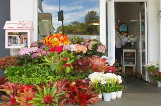 Flowers out the front of Jodie McGregor Flowers in Annandale.