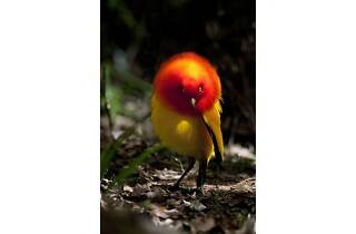 嶋田 忠 野生の瞬間 華麗なる鳥の世界