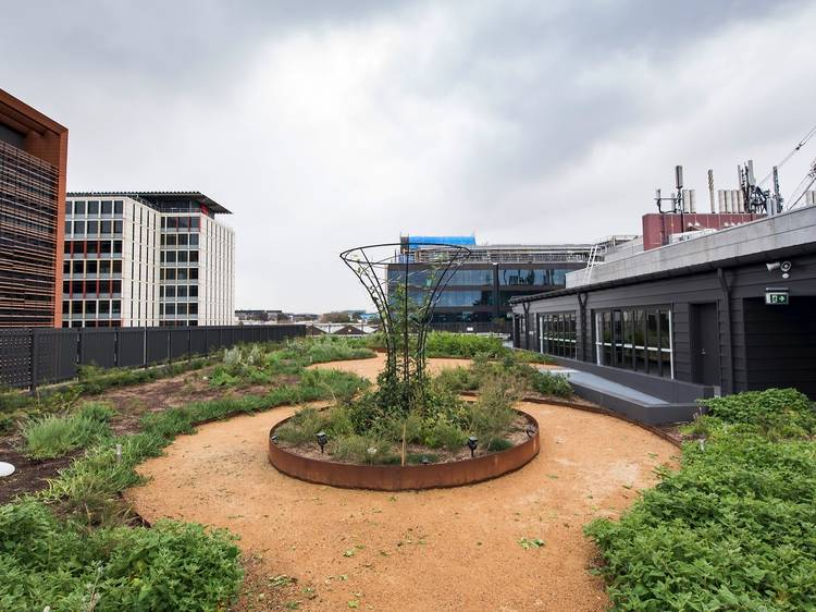 Urban farms in Sydney