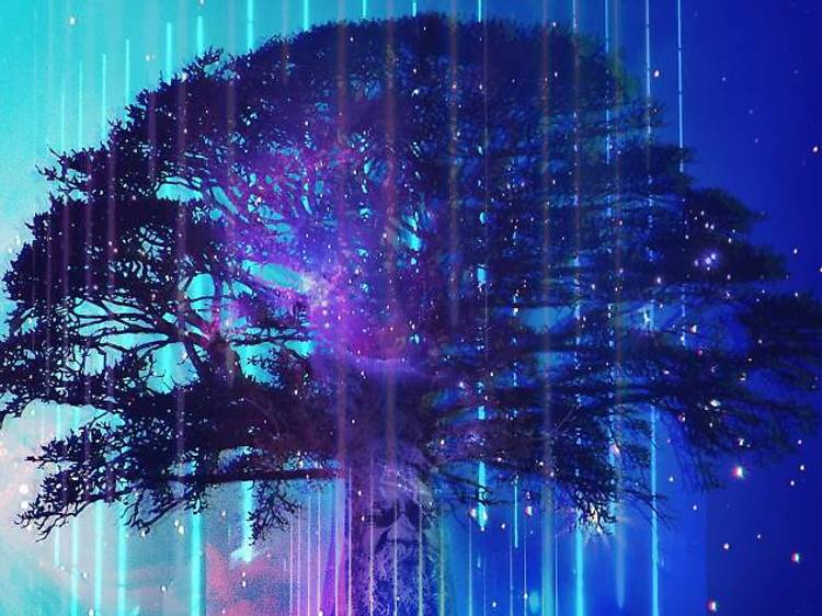 Bundjil Creation Story Tree