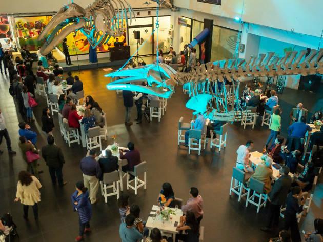 Universum Museo de las Ciencias