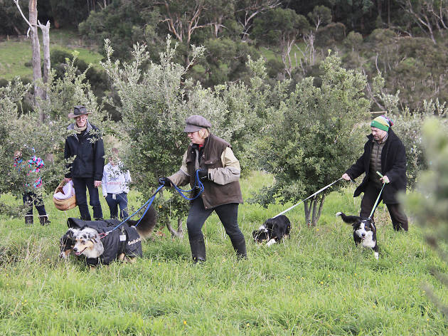 Truffle hunting Melbourne