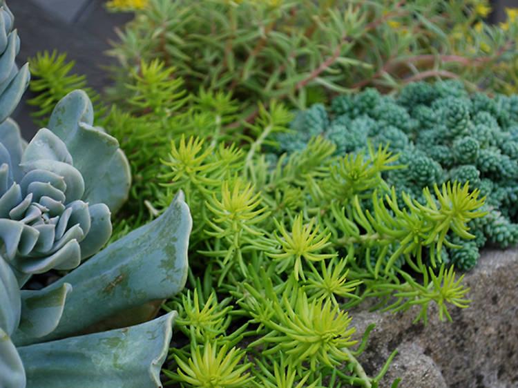 Garden Central Polanco