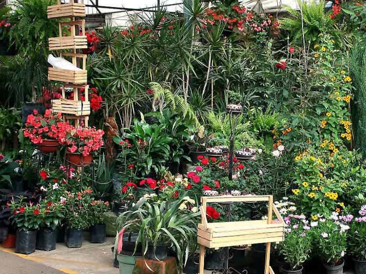 Mercado de Flores y Plantas Madreselva