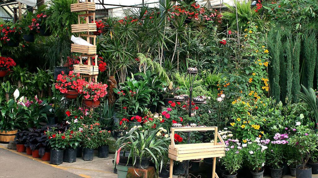 Dónde comprar plantas en la CDMX