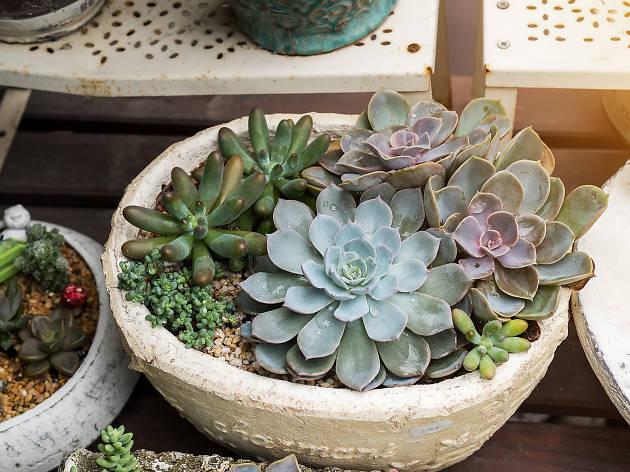 Plantas en Viveros de Coyoacán