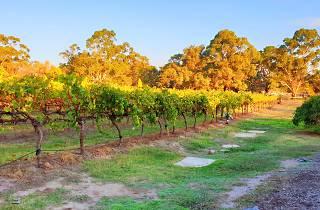 Many Hands Winery