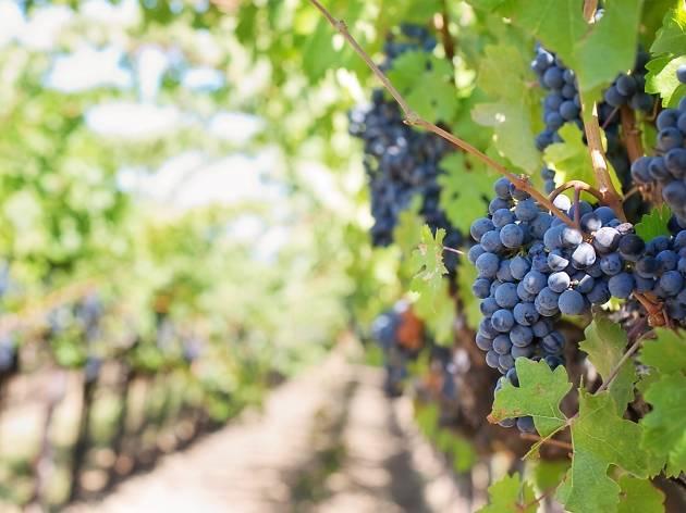 Best Yarra Valley Wineries | 13 Of The Best Yarra Valley Wineries to