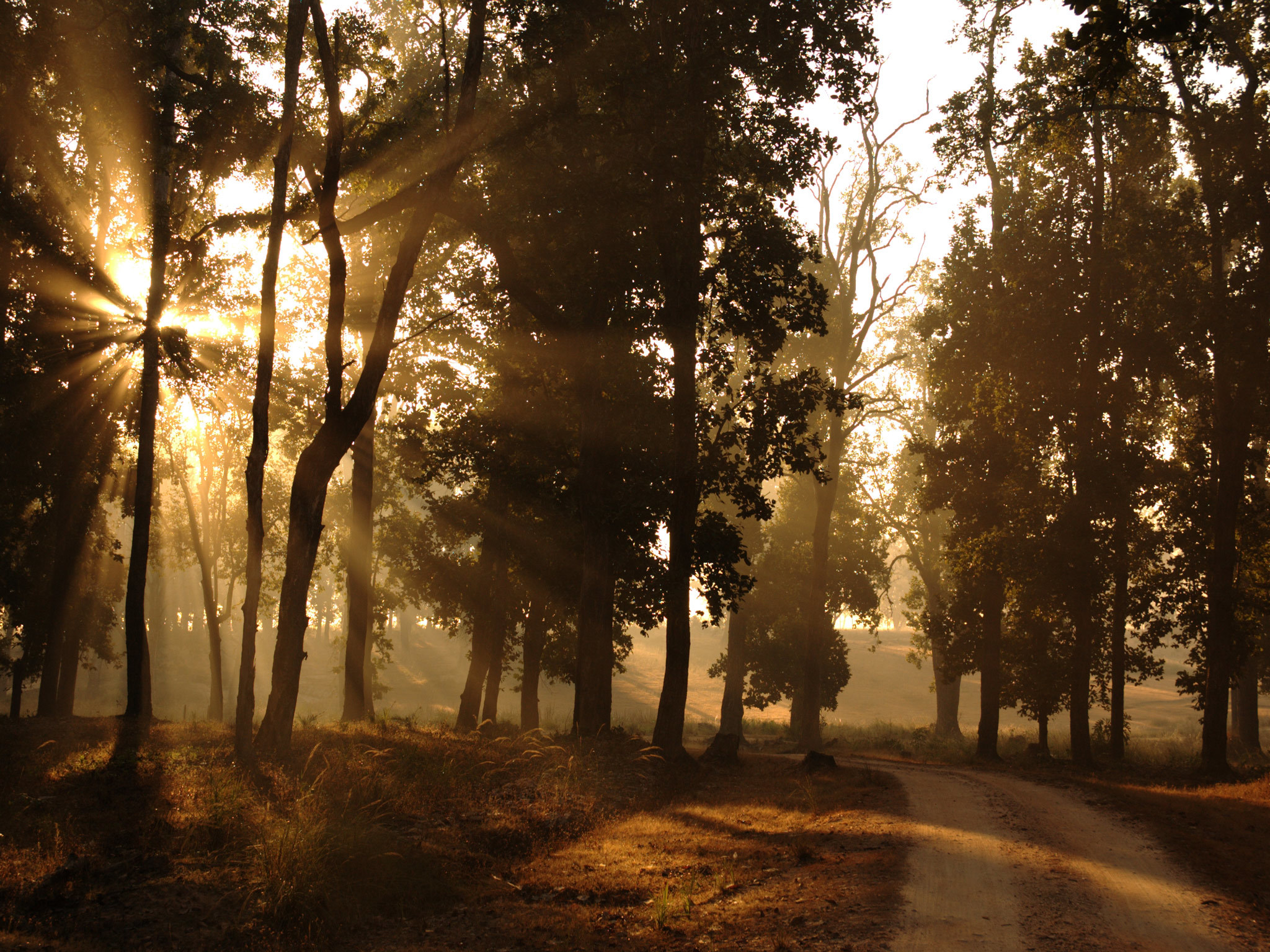 Sun peeps through the trees in Kanha wildlife reserve in Madhya Pradesh