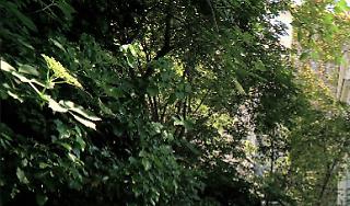 Jardin de l'hôtel Particulier Montmartre