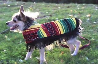 Tamal In tiene ropa y accesorios para perros