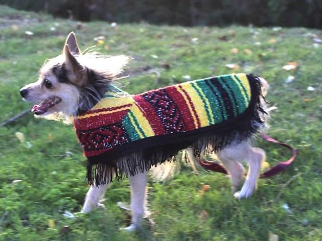 Tamal In, accesorios muy mexicanos para tu perro