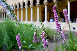 La hora dorada: Herbarius. Plantas y remedios en la Edad Media