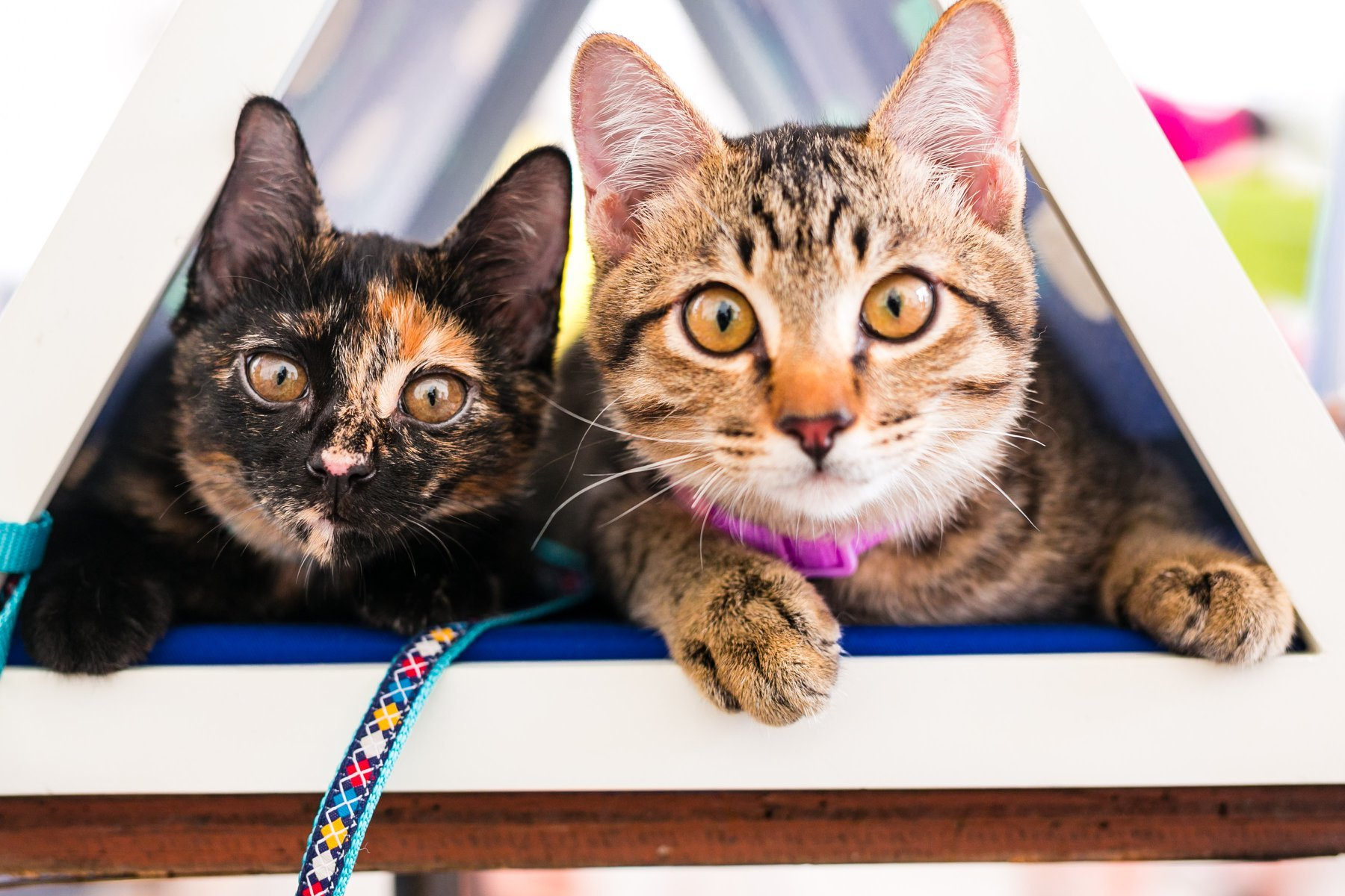 The best animal shelters to adopt a pet in Singapore