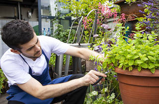 Sustainable restaurants and bars