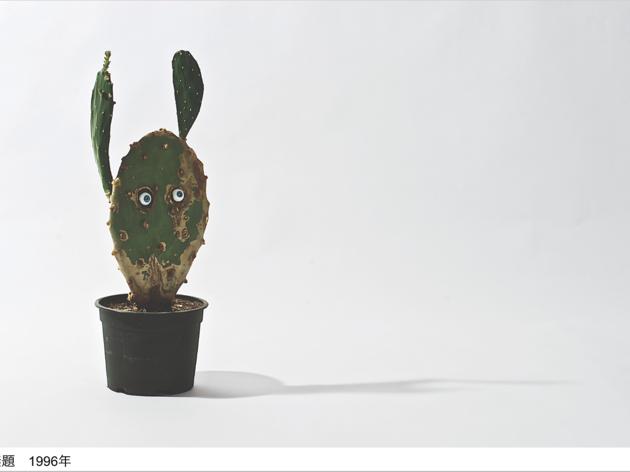 ロイス・ワインバーガー展「見える自然/見えない自然」