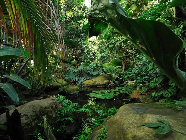 Serres Jardins des plantes