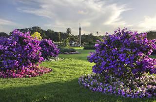 Centennial Parkland annual garden displays, Sydney
