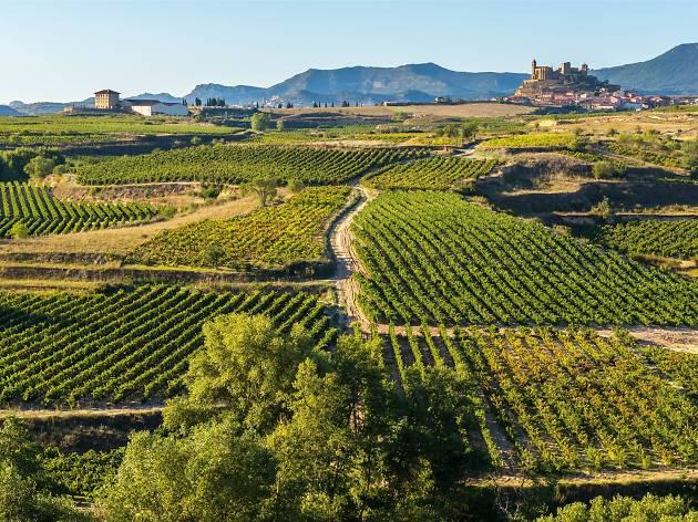 Vineyards in the Rioja region of Spain