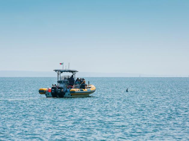 Passeio Observação de Golfinhos- Vertente Natural