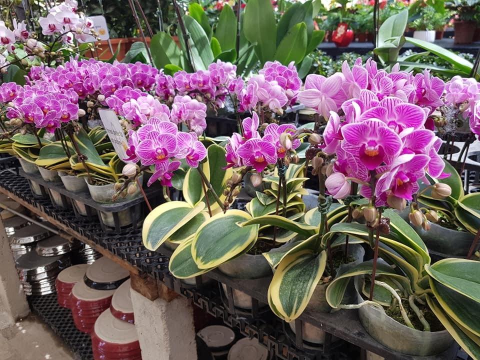 Song Lang Garden